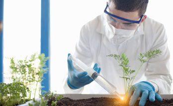 Chemists extracting phytochmical substances from a plant